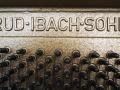 Ibach-Eiche-003