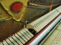Schimmel-112-Kirsch-010