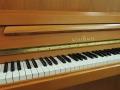Schimmel-112-Kirsch-017